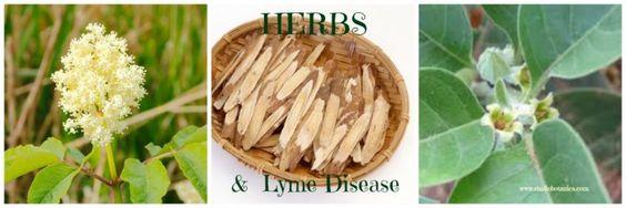 Exploring Lyme disease with Herbs - Studio Botanica