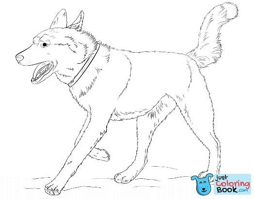 Pin Di Dog Coloring Pages