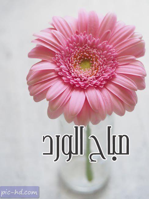 صور صباح الورد صباح الورد مكتوبة علي صور صباحية Morning Inspirational Quotes Good Morning Inspirational Quotes Morning Flowers