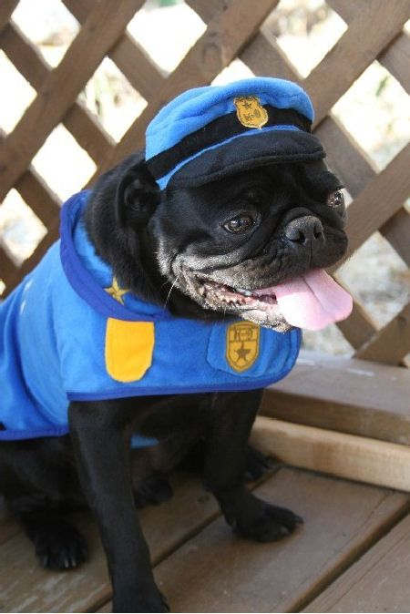 You'd better pay the snuggle toll or else the puggie police will get you!