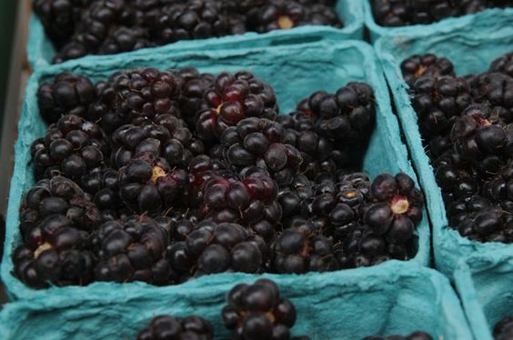 What's In Season at the Farmers Market: Youngberries and Boysenberries - Squid Ink