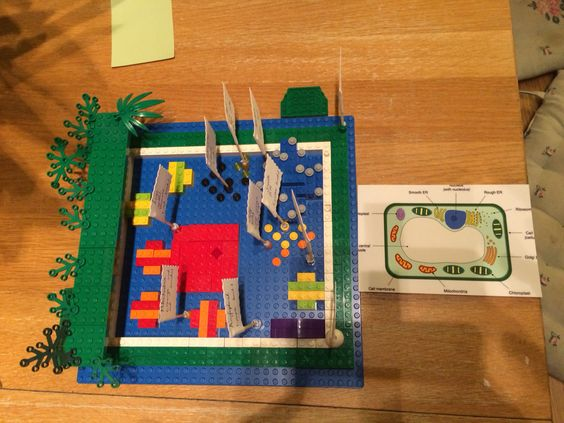 Year 7 Lego model of a plant cell   Mrs. Hibbard's ...