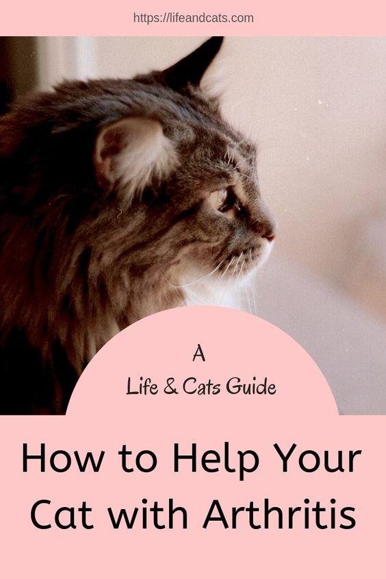 Arthritis In Cats Life Cats Cat Care Sick Cat Arthritis