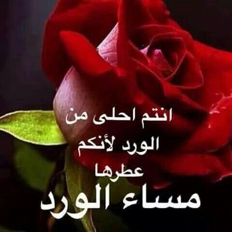 مساء الورد وعطر الورد Good Morning Messages Evening Quotes Morning Images