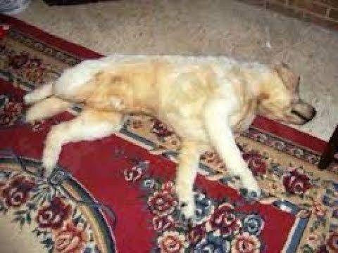 تفسير رؤية الكلاب الميتة فى الحلم In 2020 Animals Dogs