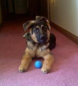 Boulder & his ball....