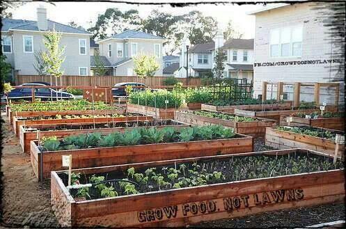 That's a nice urban garden!!