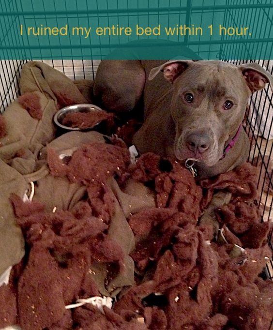 #dogshame thanks ralphie..lol