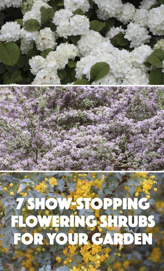 7 show stopping flowering shrubs for your garden gardens for Less maintenance plants