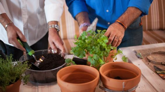 Even if you live in a small space, you can grow an abundant herb garden with just a few seeds, some potting soil and regular watering — you'll just need to get creative with the area you have. © Adrian Danciu / Kinocut Pictures, LLC