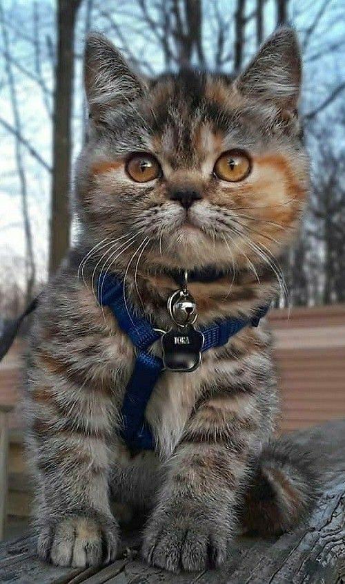 Pin By Lewey19 On Katzen Cute Cats Pretty Cats Kittens Cutest