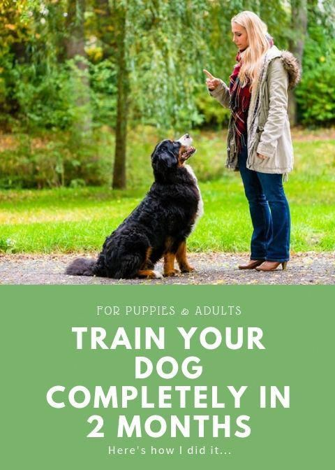 Delightful Pursued Dog Training Tips Save Me A Spot Training