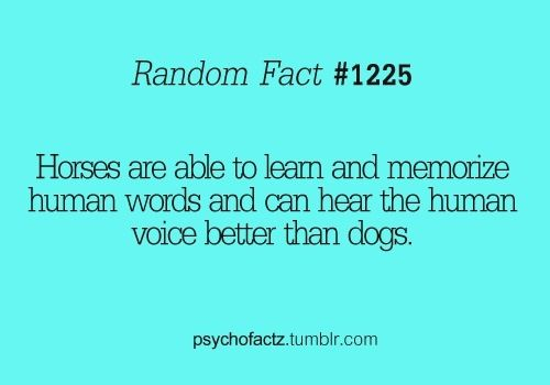 Horse Fact - Horses are able to learn & memorise Hunan words & can hear the human voice better than dogs.