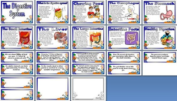 Ks2ks3 biology display the digestive system posters include ks2ks3 biology display the digestive system posters include what is the digestive system chewing food the oesophagus the stomach the small ccuart Choice Image