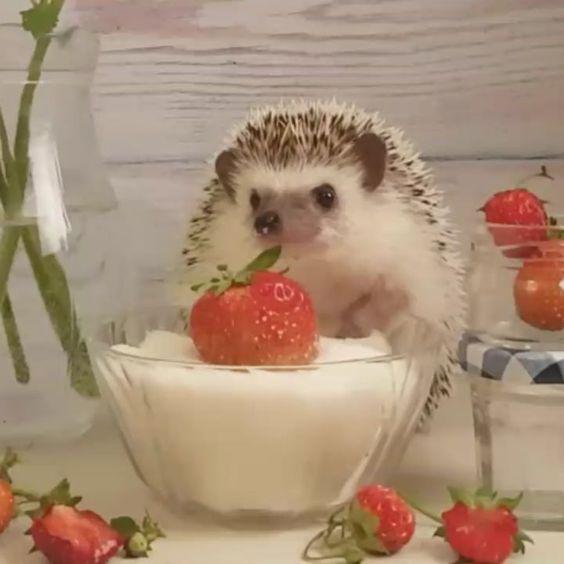 Elena Eremina sur Instagram: Фуззи собралась сделать варенье из клубники. Но оказалось, что весь урожай склевали птички! Осталось всего несколько ягодок... Но Фуззи не…