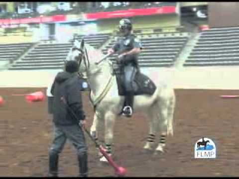 Lexington, KY Mounted Police Procedures - YouTube