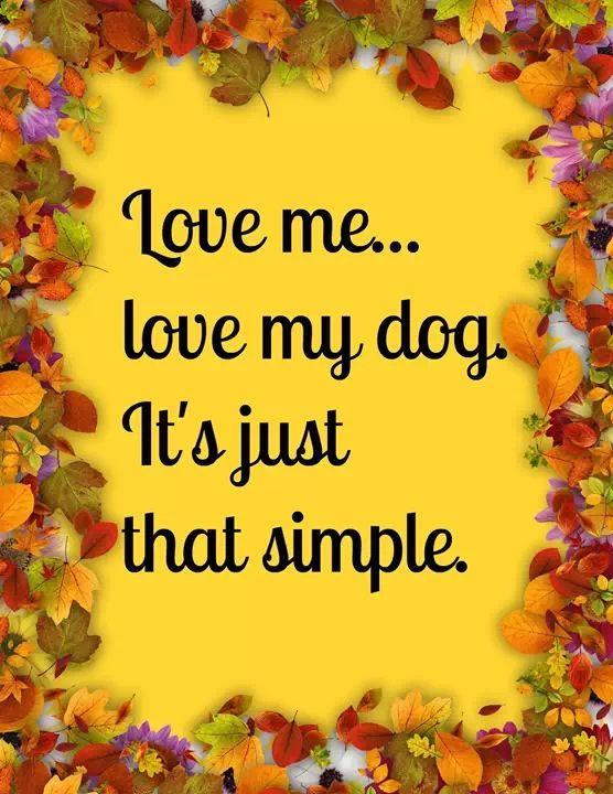 Love me...Love my yorkie