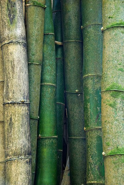 """Shades of green. Bamboo From """"the poetry of material things"""""""