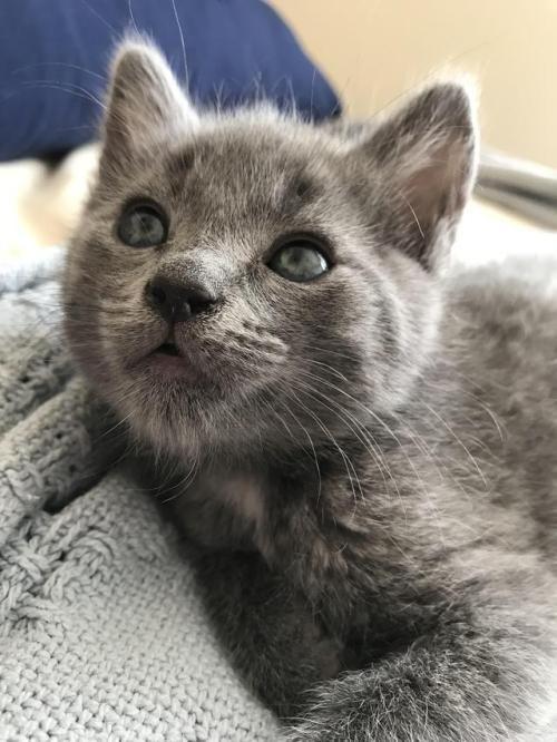 Reddit Please Say Hi To My New Kitten His Name Is Blue Via