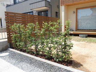 トキワマンサクの生垣 生垣 庭 づくり 玄関 植木