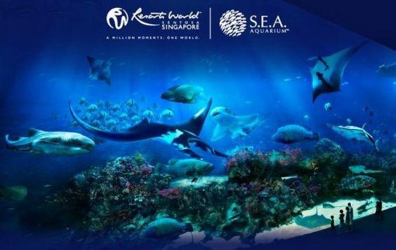 Khám phá đại dương cùng Thủy cung S.E.A Aquarium