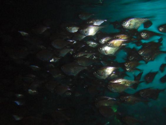 透明度もバッチリの朝一の海! - http://www.natural-blue.net/blog/info_2259.html