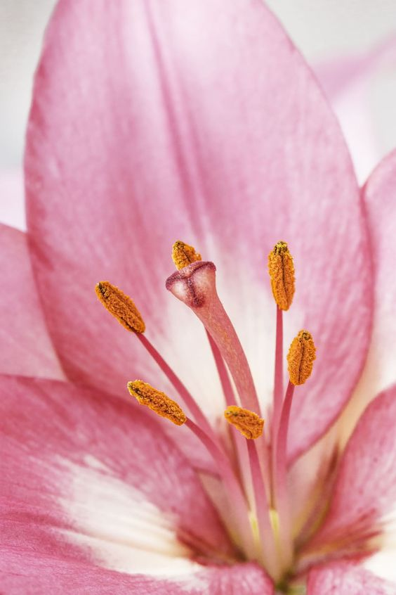 Lily's bedroom 3 by Drago Davidov on 500px