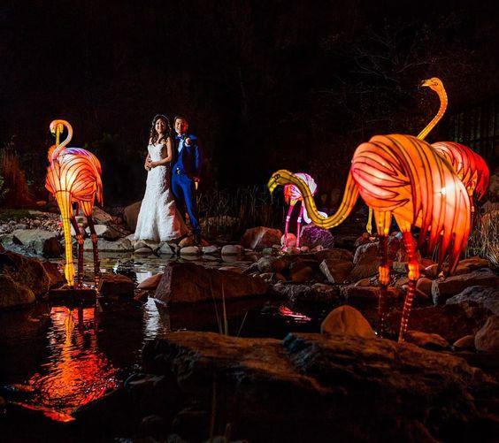 Fun shot from jack & Bernice's wedding at the #yyczoo and the #illuminasia critters.  #yycwedding #yyc #weddingphotography #nightportraits