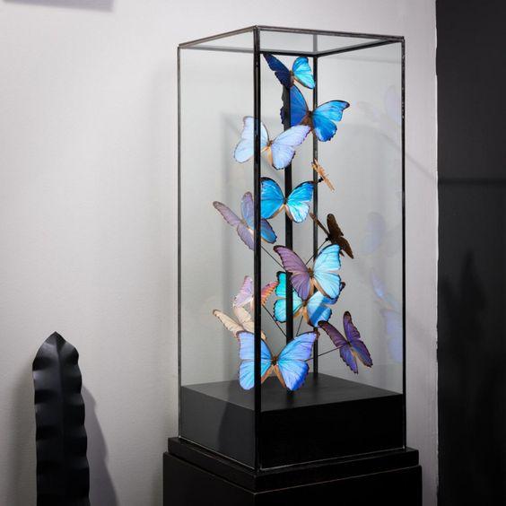 """Résultat de recherche d'images pour """"papillon cloche verre"""""""