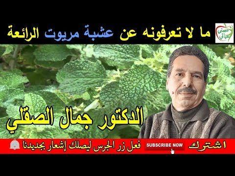 فوائد عشبة مريوت مقوية ومنشطة للكبد و القلب مع الدكتور جمال الصقلي Youtube