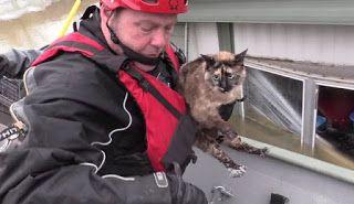 """""""O Grito do Bicho"""": Gato sobrevive a enchente usando a caixa de areia ..."""