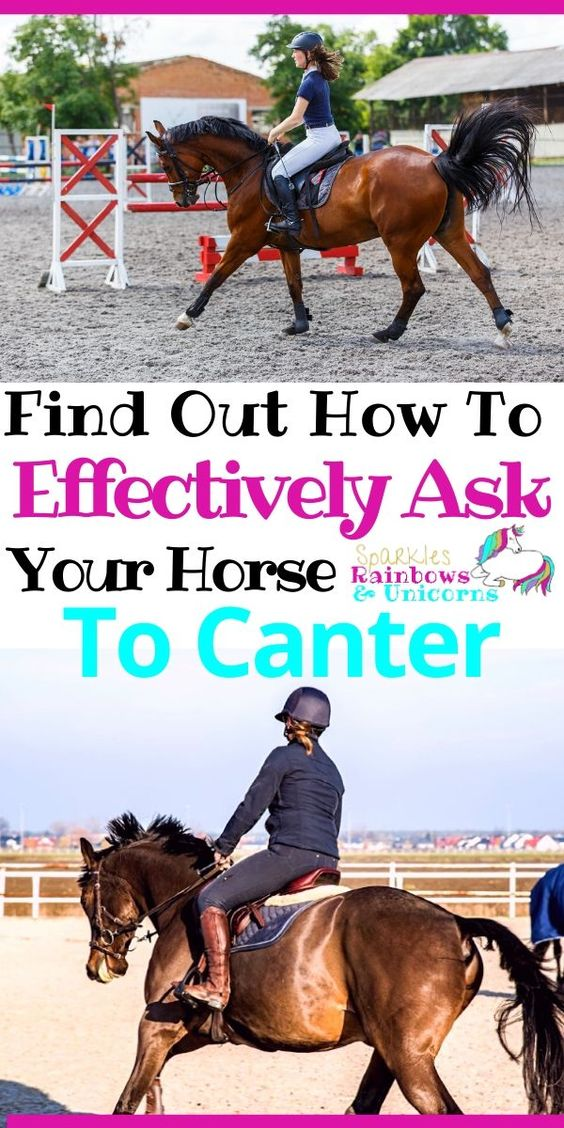 How To Effectively Ask Your Horse To Canter