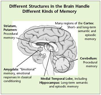 Remembering to remember memory and brain development psychology essay