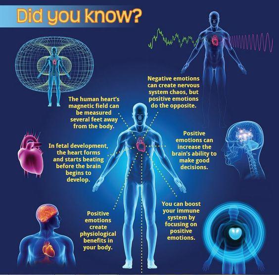 Het menselijk hart heeft een magnetisch veld van ca1,5 meter. Positieve emoties hebben een gunstige werking op mensen die in dat veld aanwezig zijn.