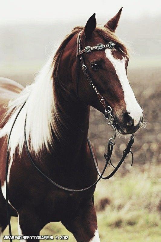M A R I E L L E Horses Pretty Horses Horse Life