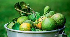 Aprenda a fazer um delicioso doce de laranja