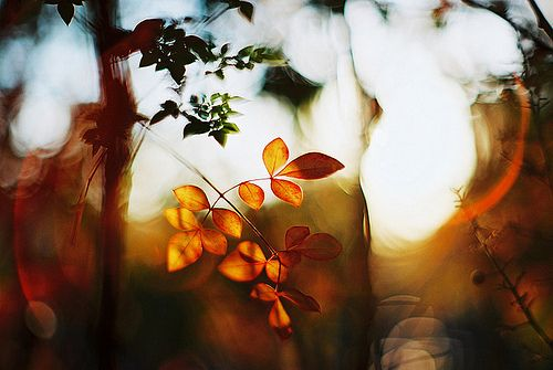 Creative film photography by breeze.kaze
