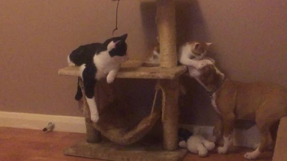"""Esse momento entre o cahorro """"Chaos"""" e os gatos """"Bob"""" e """"Kit"""" vai alegrar seu dia. Muito fofos!"""