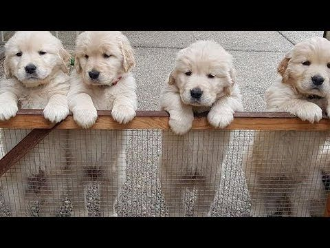 Cutest Baby Dogs In The World Cute And Funny Dog Videos Compilation Puppies Tv Lmao Animal Pics Baby Dogs Cute Puppy Videos Cute Puppies