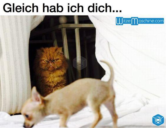 b se katze starrt kleinen hund an funny dog and cat. Black Bedroom Furniture Sets. Home Design Ideas