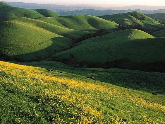 """""""The Valley"""" Pleasanton, Livermore Ca"""