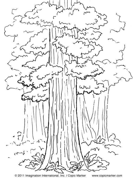 ca missions coloring pages - photo #21
