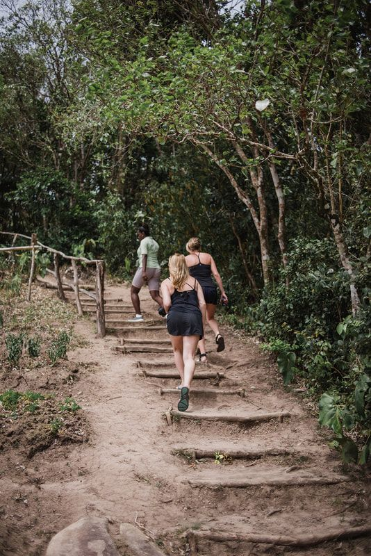 Tet Paul Nature Trail St Lucia Hike If You Re Not Into Big Climbs Such As The St Lucia Pitons This Lower Impact St Nature Trail Hiking Trip Hiking Tours