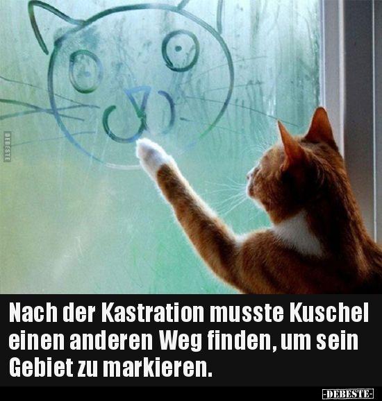 Nach Der Kastration Musste Kuschel Einen Anderen Weg Lustige Bilder Spruche Witze Echt Lustig Katzen Witze Lustige Katzenbilder Katze Lustig
