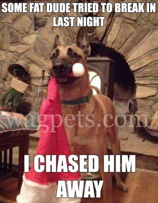 31 Animals Who Aren T So Sure About Christmas Christmas Memes Funny Funny Animal Memes Funny Dog Memes