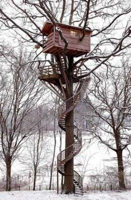 a spiral staircase around a tree trunk...that is awesome!