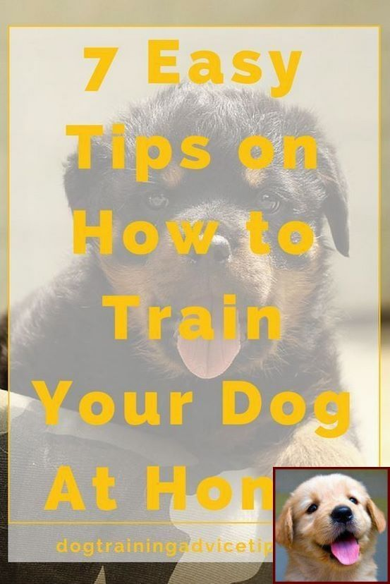 How To Train A Dog Video Download Tip 133664469 Dog Training