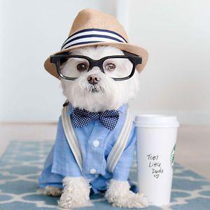 Meet Toby Littledude - Instagram's Most Adorable Hipster Pup!