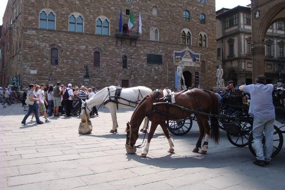 Feed bag time in Firenze, Italia