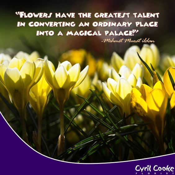 Quotes About Bouquets Of Flowers: #flower Bouquets #flower Arrangement #CorioAU